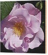 Blueberry Hill Wood Print