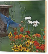 Bluebird And Colorful Flowers Wood Print
