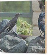 Bluejay And Mockingbird Wood Print