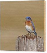Bluebird At His Post Wood Print