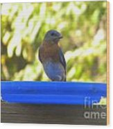 Bluebird Frisbee Wood Print