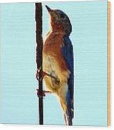Bluebird Hangin Wood Print