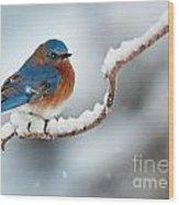 Bluebird In Snow Wood Print