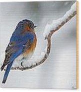 Bluebird In Snowstorm Wood Print