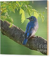 Bluebird In The Morning Wood Print