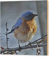 Bluebird In The Snow. Wood Print