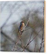 Bluebird In The Sun Wood Print