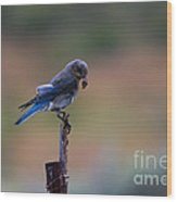 Bluebird Lunch Wood Print
