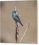 Bluebird Wood Print