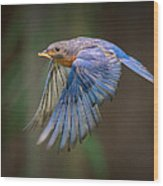 Bluebird No. 2 Wood Print
