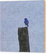 Bluebird On A Fencepost Wood Print