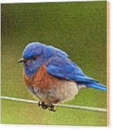 Bluebird  Painting Wood Print by Jean Noren
