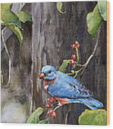 Bluebird - Red Berries Wood Print