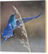 Bluebird Taking Flight Wood Print