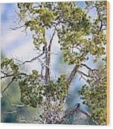 Bluebird Tree Wood Print