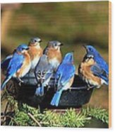 Bluebird Watering Hole Wood Print