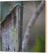 Bluebird With Nest Material In Beak Wood Print