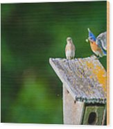 Bluebirds Hunting For Dinner Wood Print