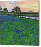 Bluebonnet Fields Forever Brenham Texas Wood Print