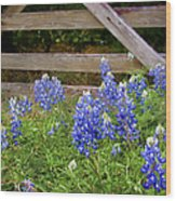 Bluebonnet Gate Wood Print