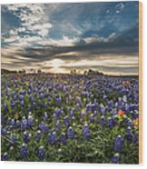 Bluebonnet Heaven Wood Print
