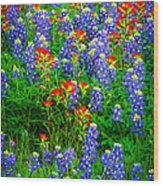 Bluebonnet Patch Wood Print by Inge Johnsson