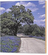 Bluebonnet Road Wood Print