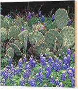 Bluebonnets And Cacti Wood Print