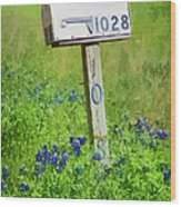 Bluebonnets And Mailbox Wood Print
