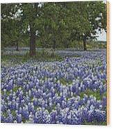 Bluebonnets And Oaks Wood Print