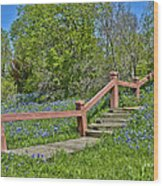 Bluebonnets And Stairs Wood Print