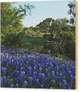 Bluebonnets By The Pond Wood Print