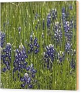 Bluebonnets In The Grass Wood Print
