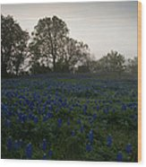 Bluebonnets On A Hazy Morning Wood Print