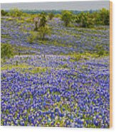 Bluebonnets Over Hill And Dale Wood Print