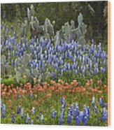Bluebonnets Paintbrush And Prickly Pear Wood Print