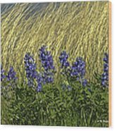 Bluebonnets With Ladybug Wood Print