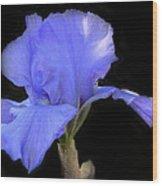 Blueirisonblack Wood Print