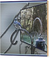 Bluejay Oob - Featured In 'out Of Frame' And Comfortable Art Groups Wood Print
