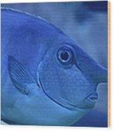 Bluespine Unicorn Fish Wood Print by Karon Melillo DeVega