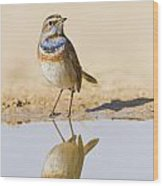 Bluethroat Luscinia Svecica Wood Print