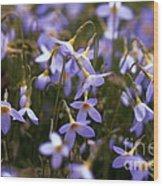 Bluets Wood Print