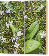 Bluets In Stereo Wood Print