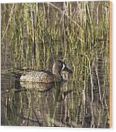 Bluewing Teal Wood Print