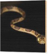 Blunthead Tree Snake Wood Print