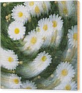 Blurred Daisies Wood Print