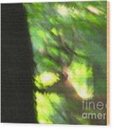 Blurry Buck Wood Print