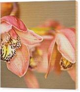 Blush Orchid Wood Print