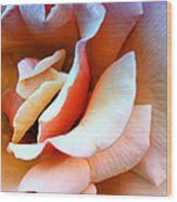 Blush Pink Palm Springs Wood Print