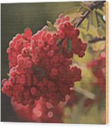 Blushing Berries Wood Print